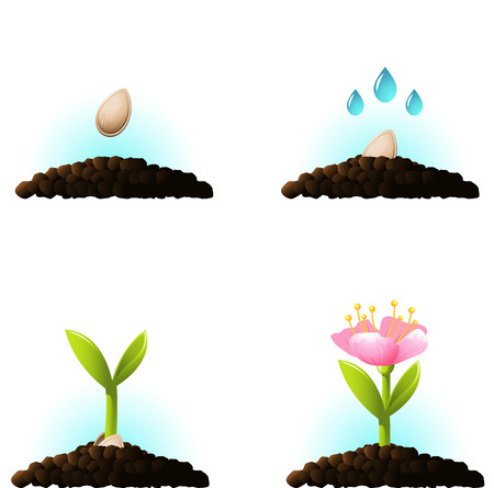 fertile: Seed sprout. set of vector icons. eps 10
