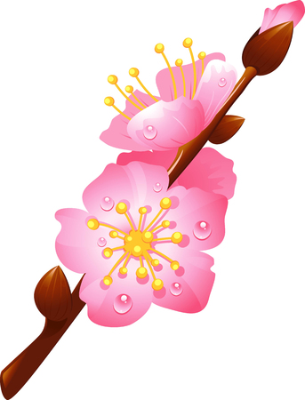 mildew: flowering cherry branch with drops of dew Illustration