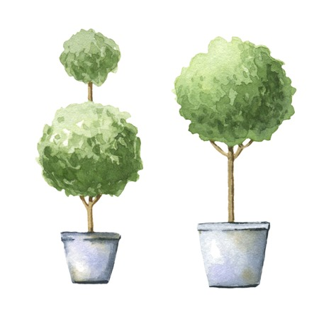 topiary: Decorative trees in pots. Watercolor illustrations.