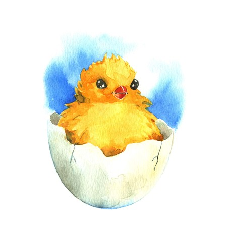 poult: Chicken in the eggshell. Watercolor illustration on a white background