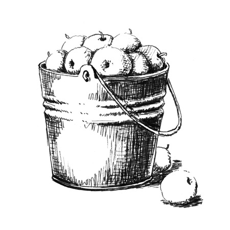 Bucket of apples. Hand drawn sketch Stock Photo