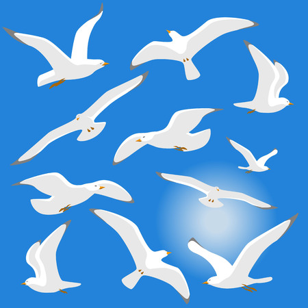 Seagulls isolated on blue background. Vector illustration. Eps 10