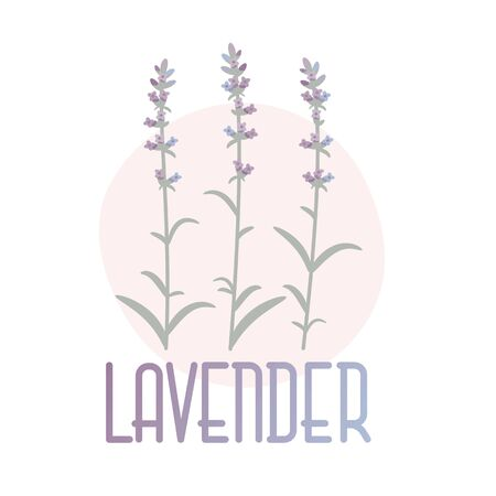 Lavender. Vector concept image in Provence style.