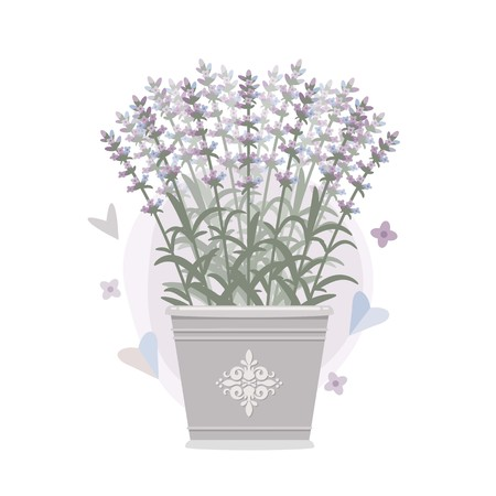 Bouquet of lavender in a bucket. Vector illustration.