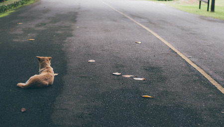 with no one: Dogs abandoned in the street, no one cares. Stock Photo