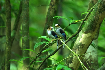 Lovebirds in the forest Stock Photo