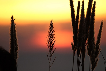 Last rays of the sun.Last rays of the sun. Its a beautiful light that you are describing. photo