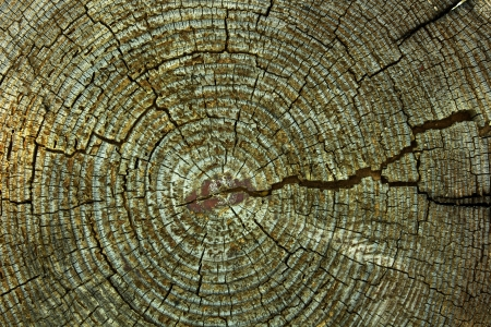 Abstract crack wood ancient Stock Photo - 14853962