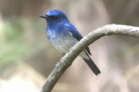 migrate: The migratory birds come in during the winter. On through the winter, and then migrate back Stock Photo