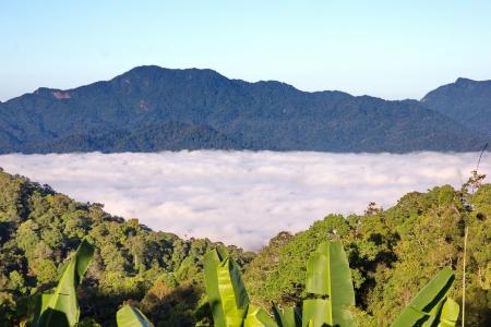 vapore acqueo: Nebbia mare si verifica quando il vapore acqueo che galleggia sopra la foresta sotto gli alberi bel giro. La Thailandia � una popolare attrazione turistica.