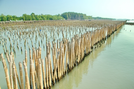 Mangrove conservation.  photo