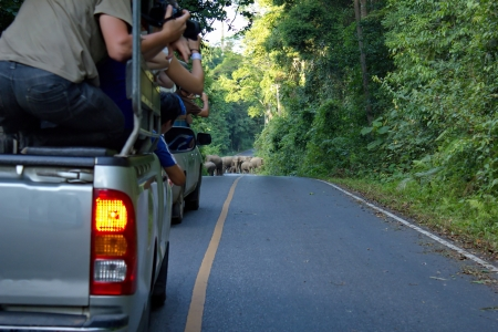 Elephant common way to khao yai National Park in Thailand