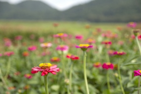 Mountains, beautiful natural flower field. Ideal for relaxation.