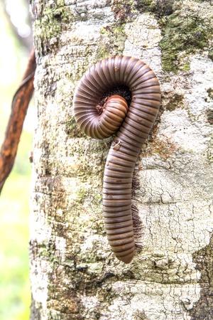 small reptiles: Millepiedi hanno le gambe e piccoli rettili che vivono nelle vicinanze di case e foreste.