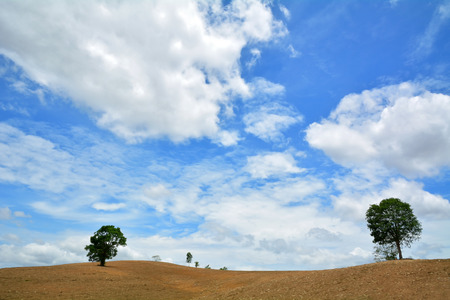 broad leaf: Acres baldness after harvest. But bare soil and trees Stock Photo