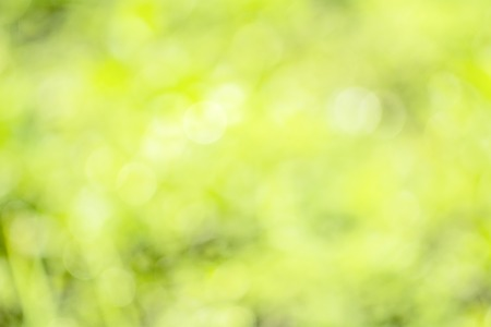 Day light reflected on water And thus the focus is on beautiful bokeh background with trees and grass Stock Photo