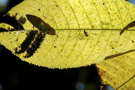 luz natural: Hojas con luz natural en las selvas tropicales en el buen tiempo Foto de archivo
