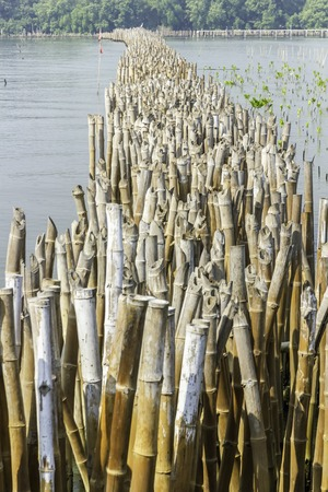 bamboo stick: Conservation of wetlands and water erosion in the Gulf of Thailand is a problem in every year. To lose a lot of ground. Conservation began planting bamboo stick to remove the soil flows into the sea