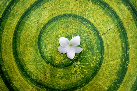 White flowers on the table with a circular pattern