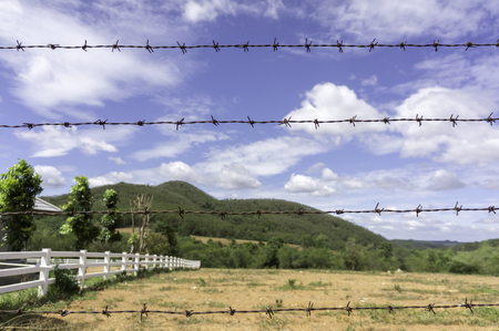 Created in barbed wire cattle farm Stock Photo