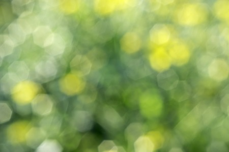 Chrysanthemum flowers are intentionally blurred, out of focus bokeh can see Stock Photo