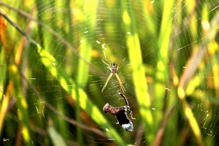 hairy legs: spider in farm rice Stock Photo