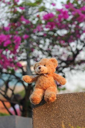 Teddy bear in the park