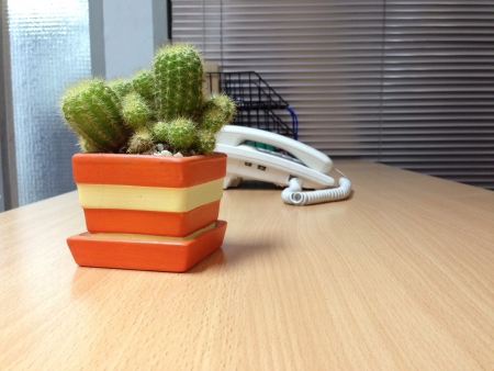Cactus in pot Orange on Desks office