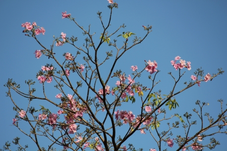 Pink flowers with blue sky  photo
