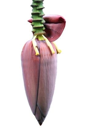 acuminate: banana flower  Stock Photo