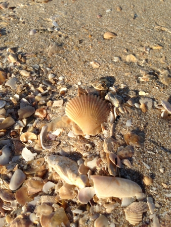 colour: Shells on the beach Stock Photo