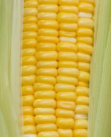 Fresh summer corn Stock Photo