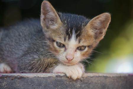 cat sad
