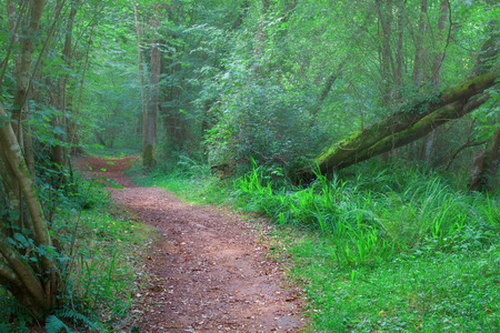 cantabrian: Cantabrian forest