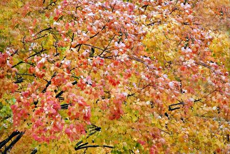 yellows: The color of autumn. Natures rich orange, red, and yellows. Stock Photo