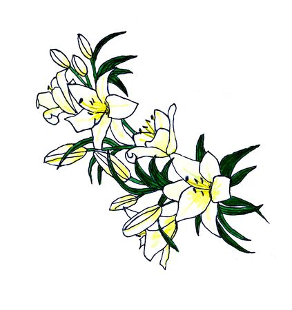 A sketch of some Easter lilies. Hand sketched with touched of acrylic for color.