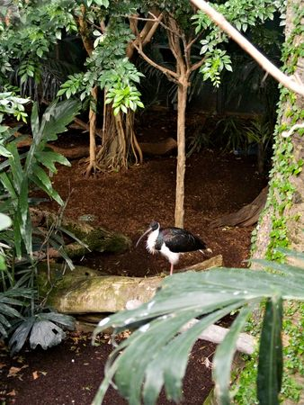 A wildlife exhibit in a zoo showing a bird with a long beak among the trees.