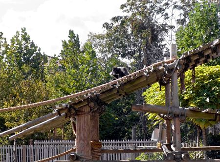 An image of a monkey in a modern zoo with lots of play equipment.