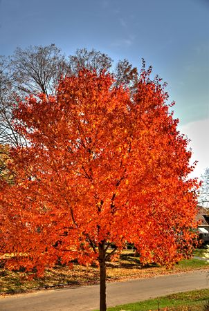 A tree in the city covered in the orange leaves. Stock Photo