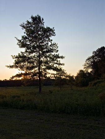 the silence of the world: An American mid west sunset with trees in view.  Stock Photo