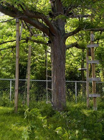 ツリーの木の家につながったロープのはしご。 写真素材