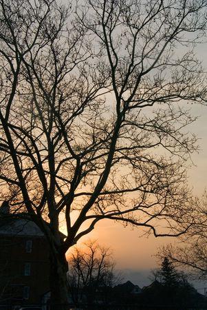 フォア グラウンドで建物とツリーのシルエットを持つ大都市での日の出。