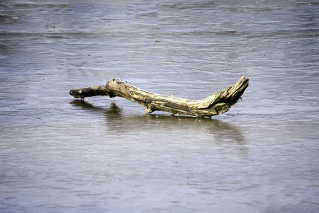 A fallen branch on a river beginning to form ice.