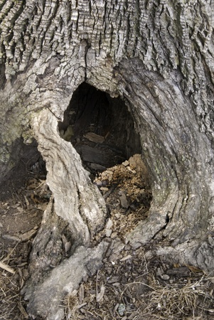 An old tree trunk showing bark and a hole at the bottom.