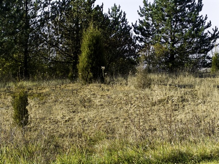 An open field with weeds, brambles and trees.