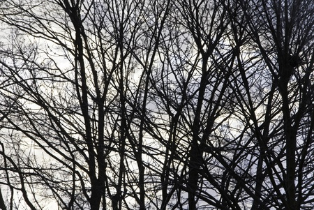 Winter tree branches silhouetted against an slightly overcast sky.