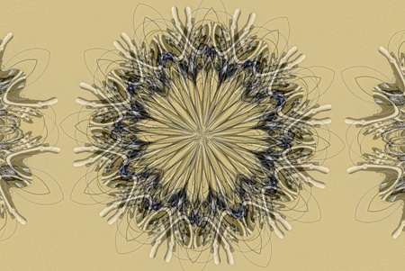 algorithms: A digitally generated image using a set of algorithms on an original photo to create complex flower shaped design.