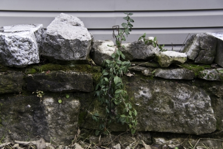 A aging stone wall with a seed flourishing beside.
