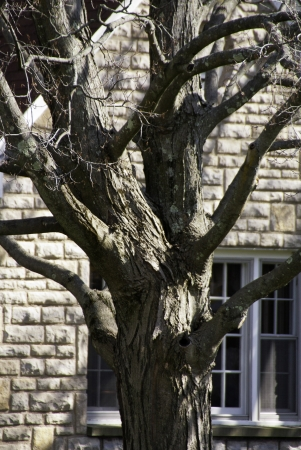 beautify: An old tree with beautify textures and shapes in the foreground of a house and window.