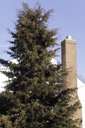 tall chimney: A tall evergreen tree with a house and chimney and blue sky